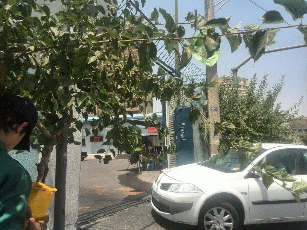 درب ورودی مرکز پرداخت خسارت بیمه ایران شعبه فاطمی