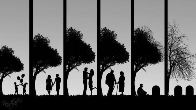 life-cycle-picture